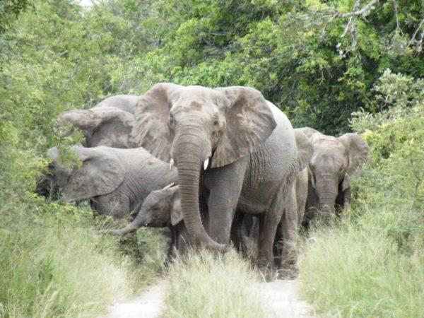 Bigjump-Africa