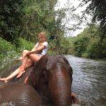 elefantenprojekt-jstets1