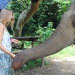 elefantenprojekt-jstets3