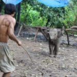 elefantenprojekt-jstets5