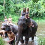 elefantenprojekt-jstets6