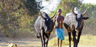 Freiwilligenarbeit in Ruanda