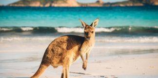 Sprachreisen in Australien